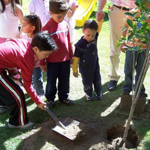 Árboles 2009